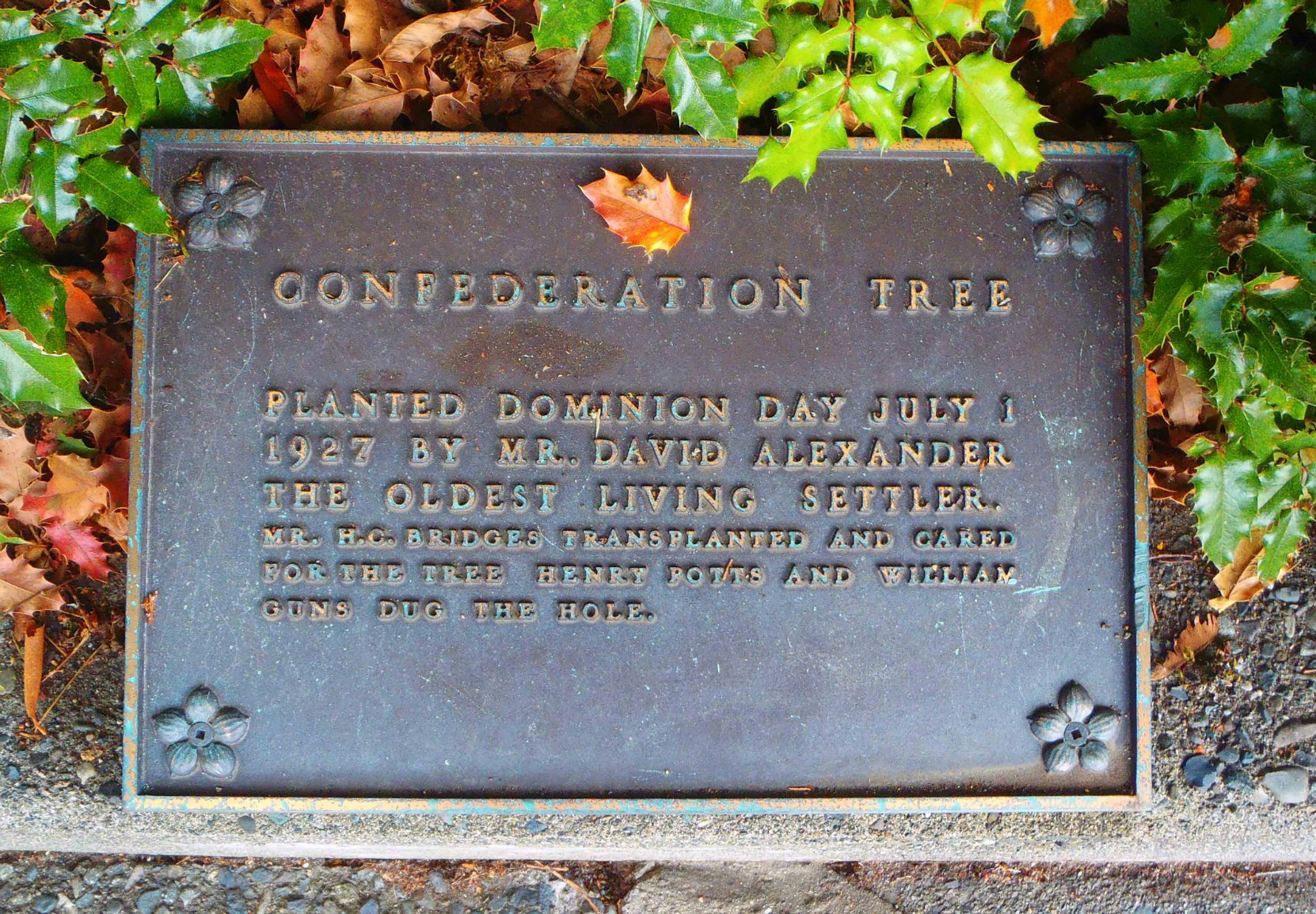 Confederation Tree commemorative plaque, Government Street, Duncan, B.C.