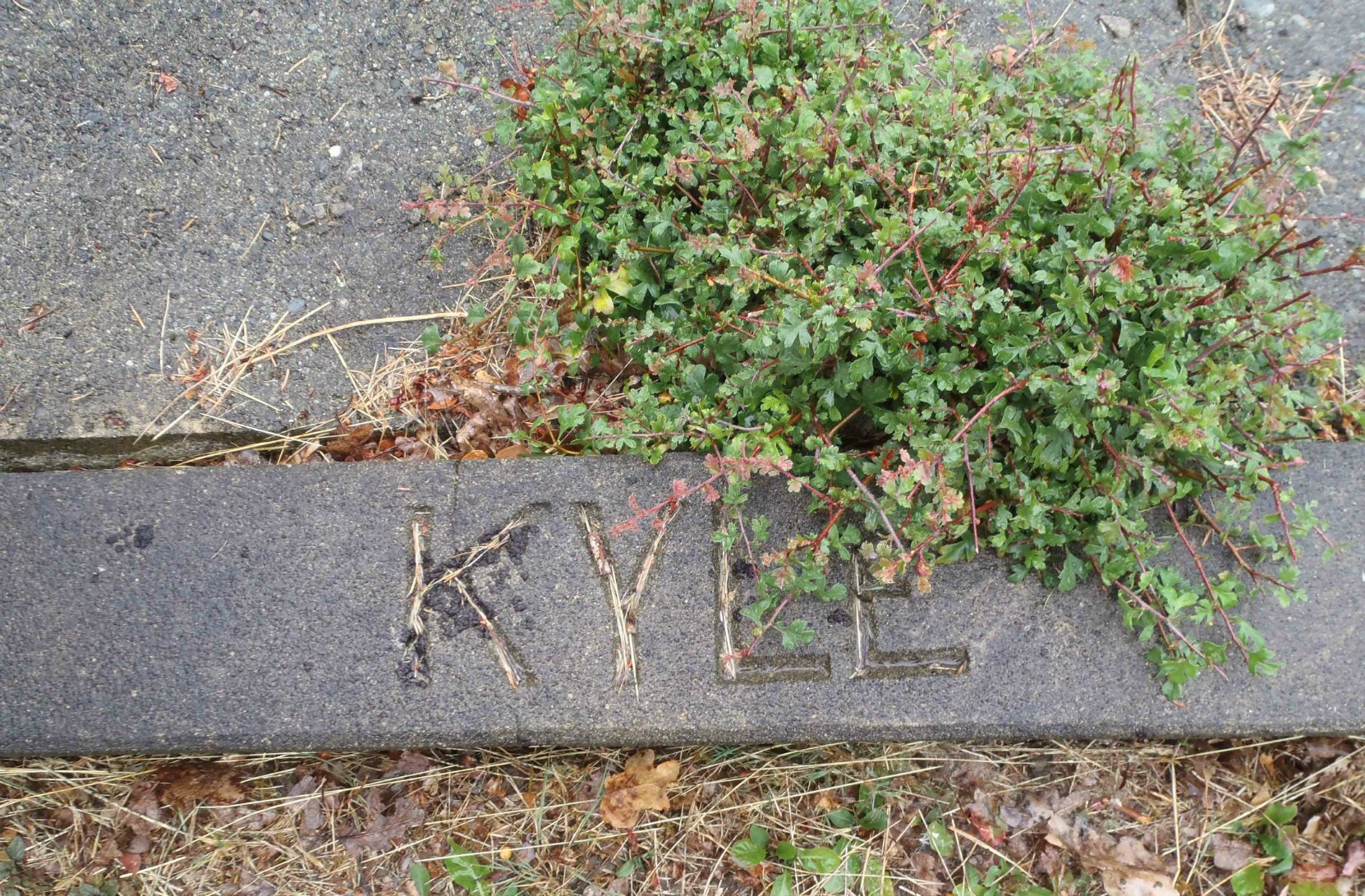 John Kyle grave marker, Mountain View Cemetery, North Cowichan