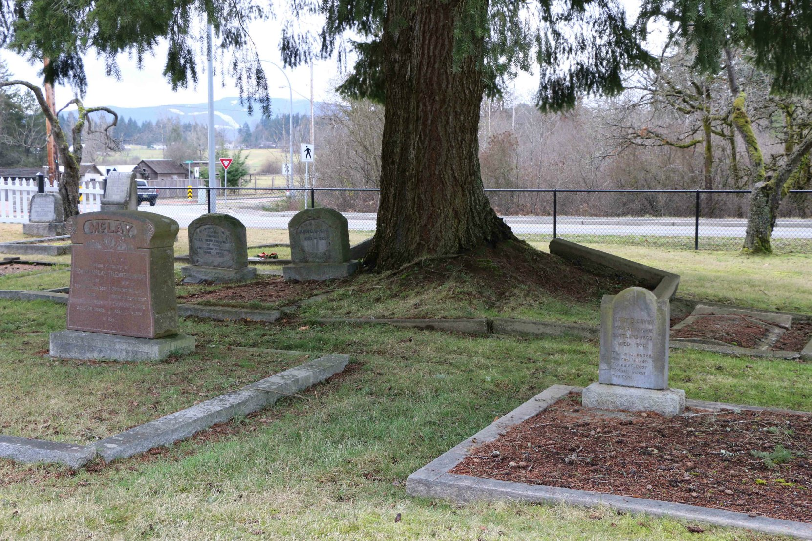 The unmarked grave of Isaac Newton Van Norman is between the two marked graves in the foreground. His brother Thomas Van Norman is buried the grave to the right of the large tree in the background. Mountain View Cemetery, North Cowichan. (photo by Temple Lodge No. 33 Historian)