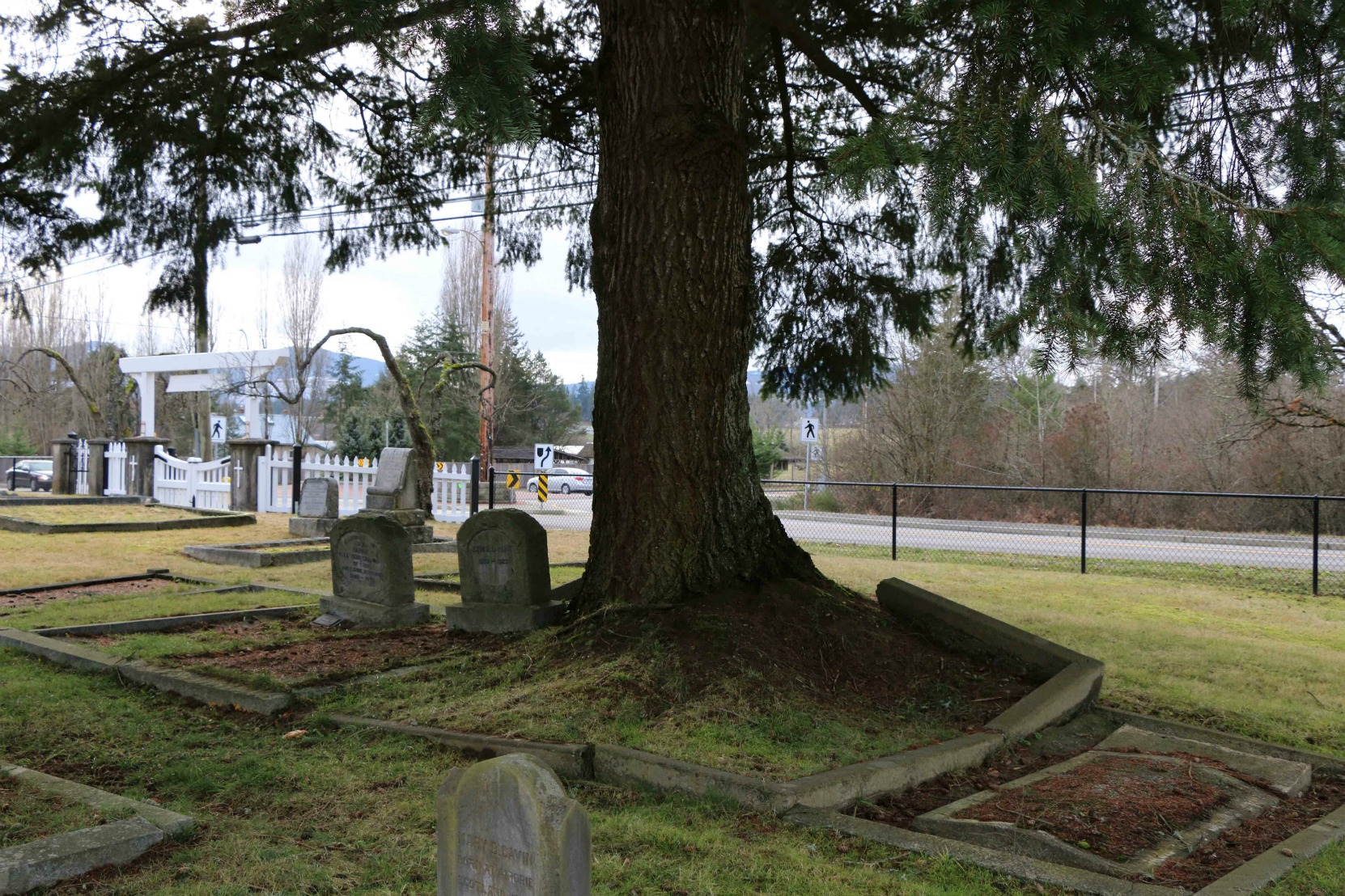 The grave of Thomas Van Norman and his wife in Mountain View Cemetery, North Cowichan. A large tree is growing in the Van Norman grave and has raised the concrete border around the grave. (photo by Temple Lodge No. 33 Historian)