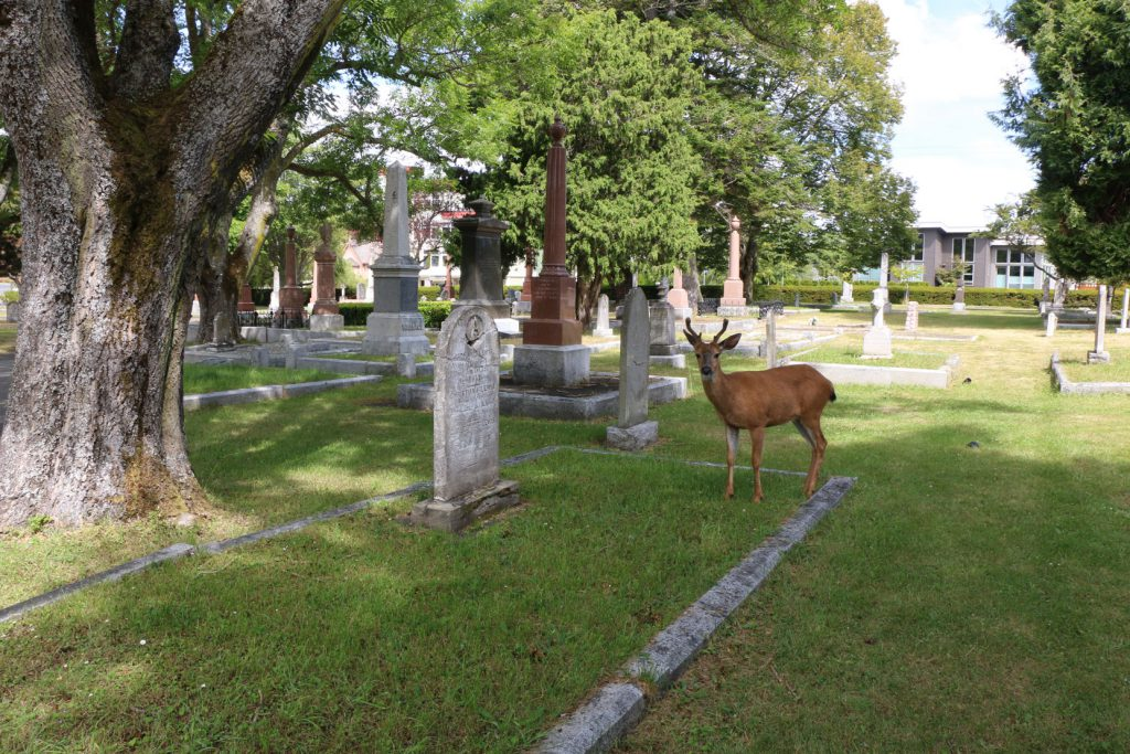 Richard Lewis grave with one of the deer residing in Ross Bay Cemetery, Victoria, BC (photo: Temple Lodge No. 33 Historian)